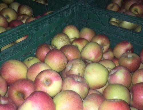 Herbstzeit ist Apfelzeit