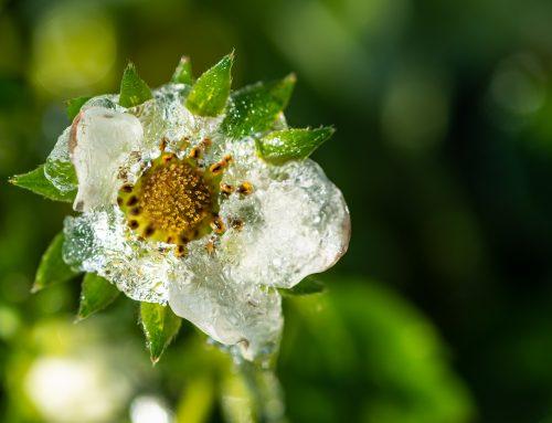 Schutz vor Frost